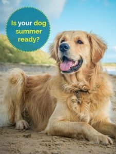 Is your dog summer ready?